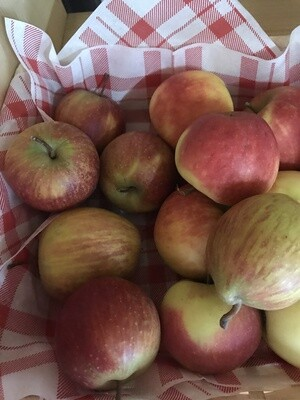 Apfel Stk.