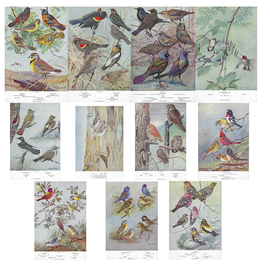 American birds history book collage pak ***Printed Version*** 11 pages