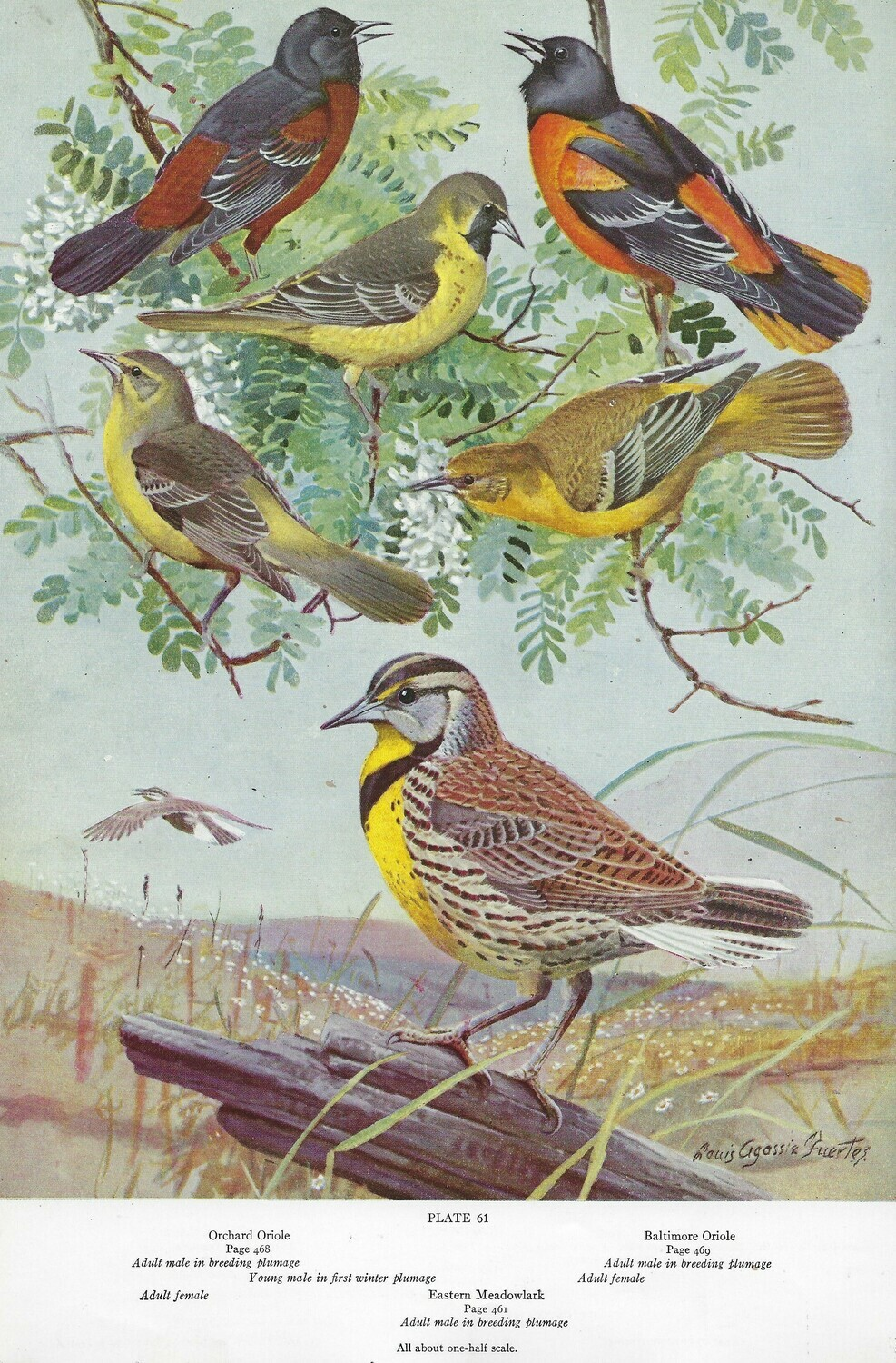 American birds history book collage pak instant download 11 pages