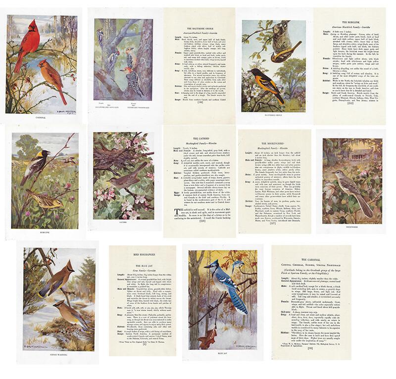 Vintage Land bird book Instant Download