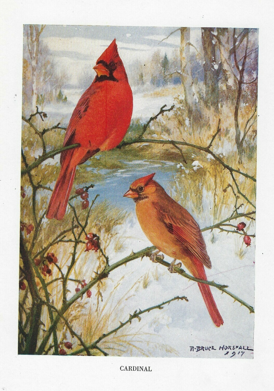 Vintage Land bird book ***PRINTED VERSION*** 14 pages