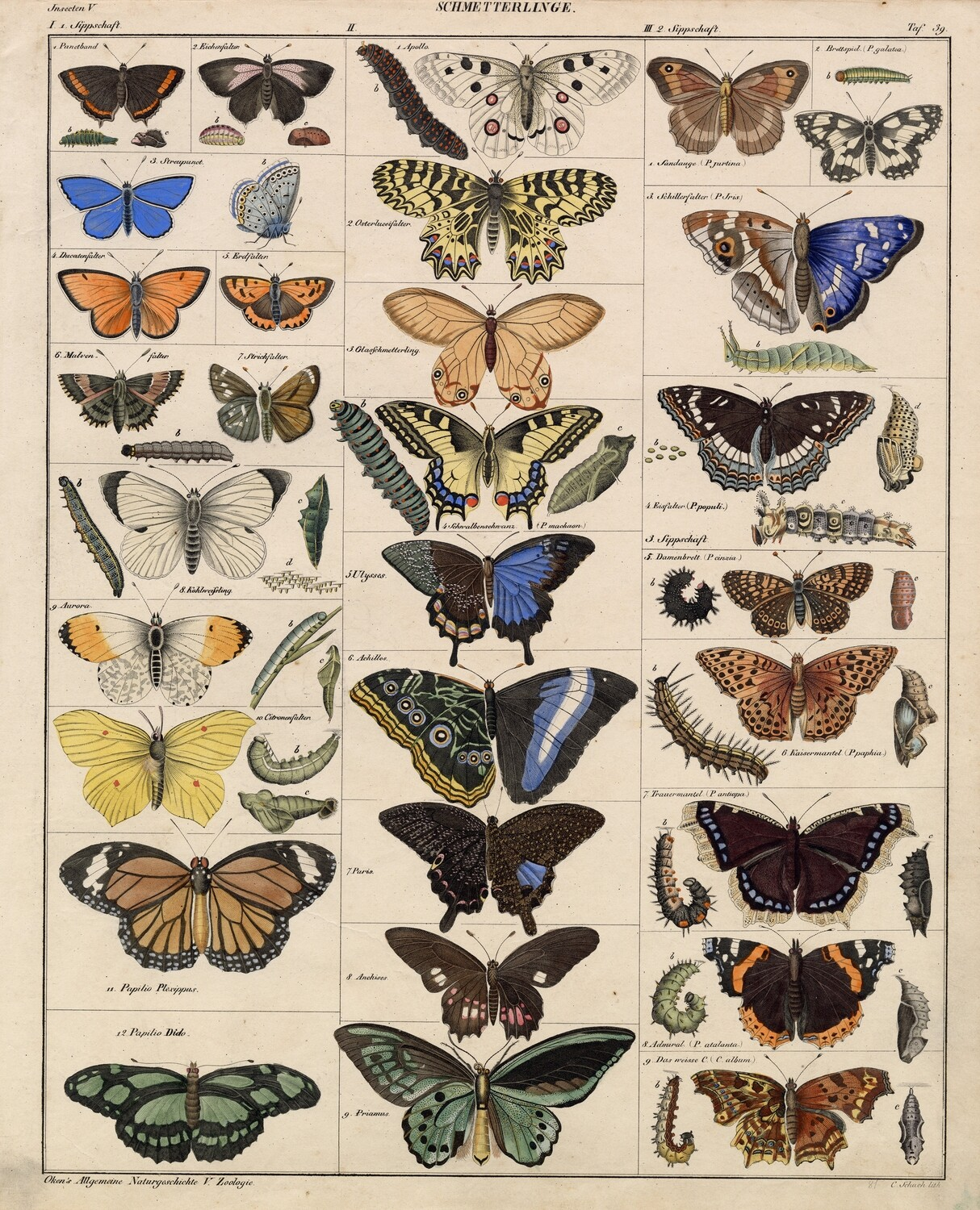 Vintage Muted Butterflies collage pak  Instant download 9 pages