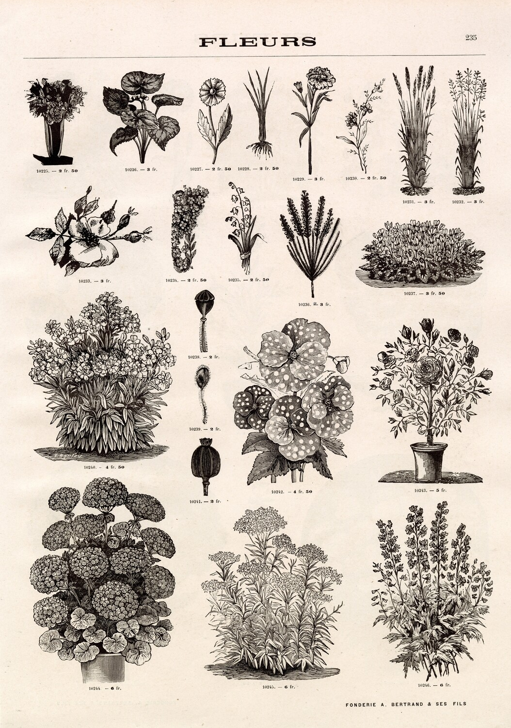 Large Neutral Flower Drawings collage pak instant download 7 pages