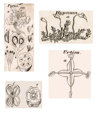 Neutral Flower collage pak instant download 6 pages