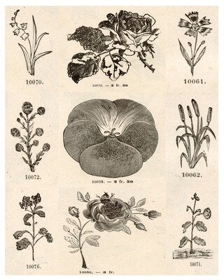 Flower Sketches collage pak instant download 10 pages