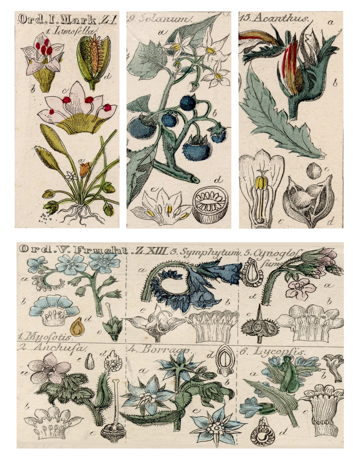 Wildflower Sketches 2 collage pak instant download 7 pages