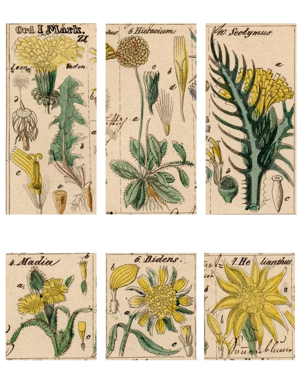 Wildflower Sketches 1 collage pak instant download 6 pages