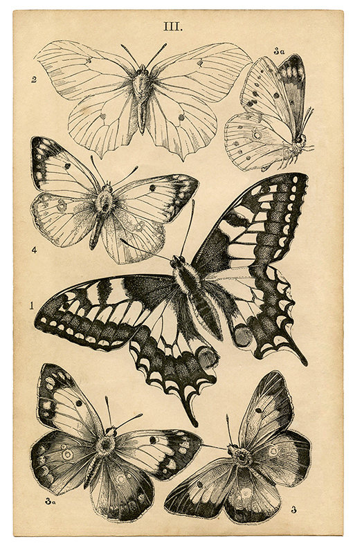 Vintage Butterfly collage pak Sunday inspiration 12-3-17 instant download