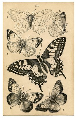 Vintage Butterfly collage pak Sunday inspiration 12-3-17 ***PRINTED VERSION*** 10 pages