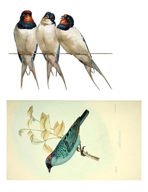 Vintage Bird collage pack 6 pages ***PRINTED VERSION***