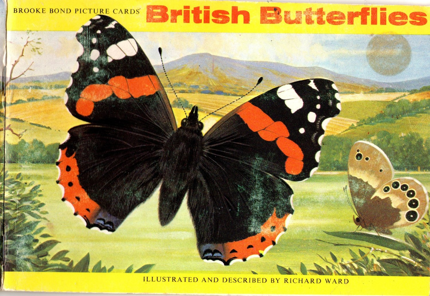 British butterfly vintage book 11 page ***PRINTED VERSION***