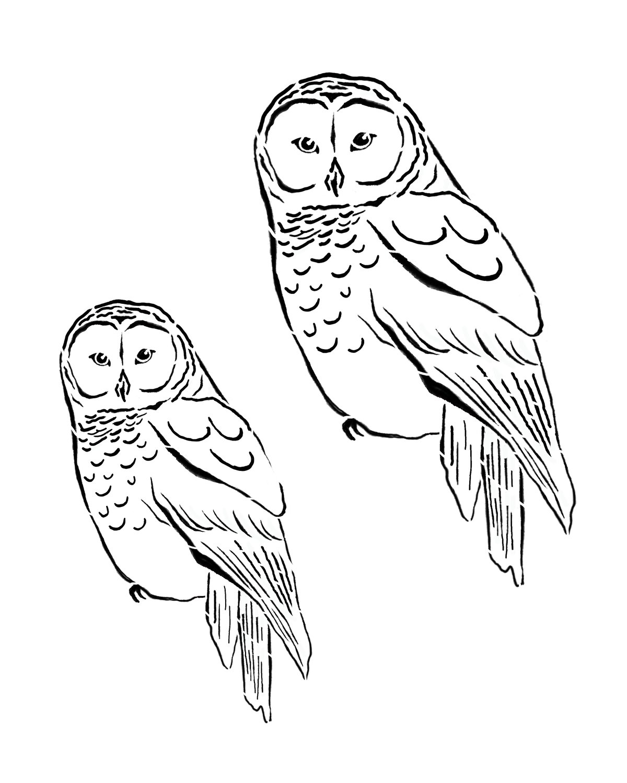 Woodland creatures Owl 8x10