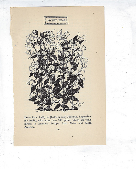Awakening Collage pak for Sunday inspiration 1-20-19 **PRINTED VERISON*** 9 pages