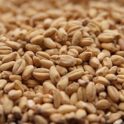 Canada Malting Wheat Malt