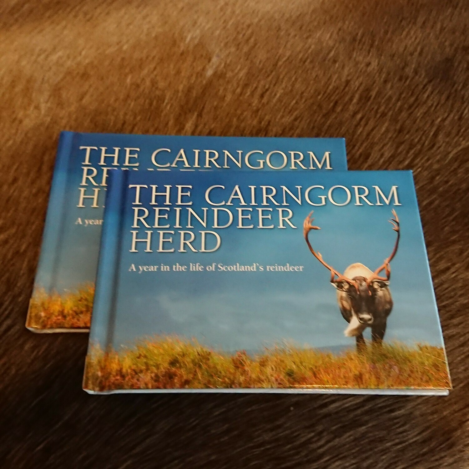 A Year in the Life of Scotland's Reindeer: Photo Book