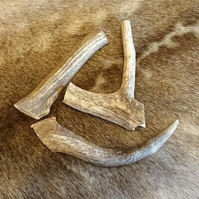 Red Deer Antler Section