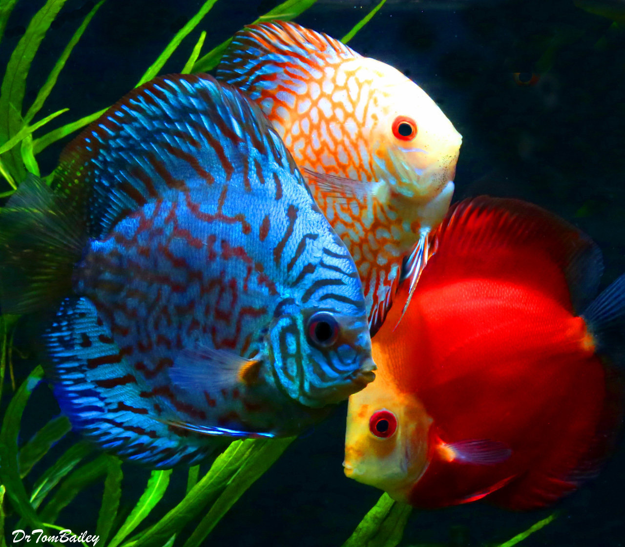 Premium Assorted Discus