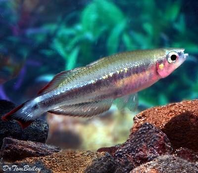 Premium Madagascar Rainbow