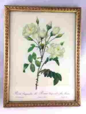 Cadre doré roses