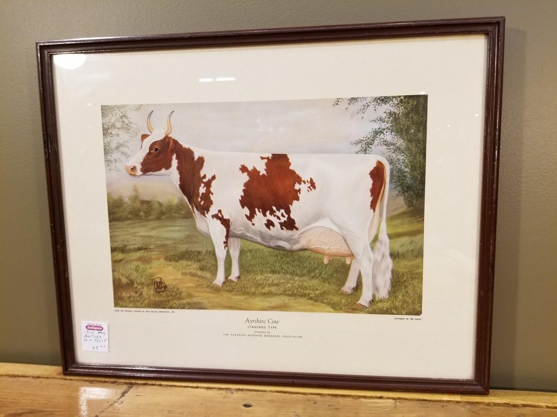 Ayrshire Cow- Ross butler- Print