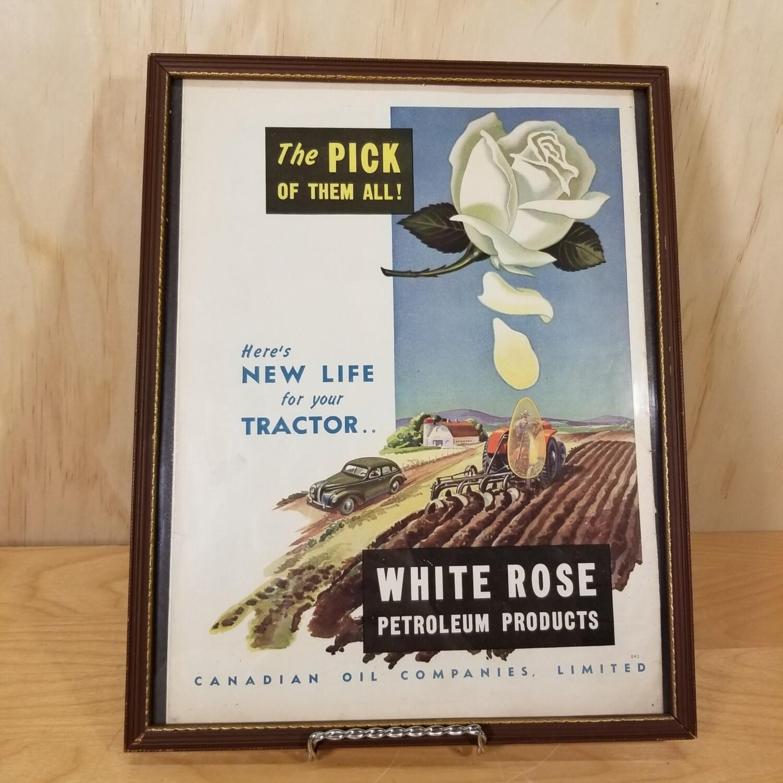 1943 Original White Rose Ad