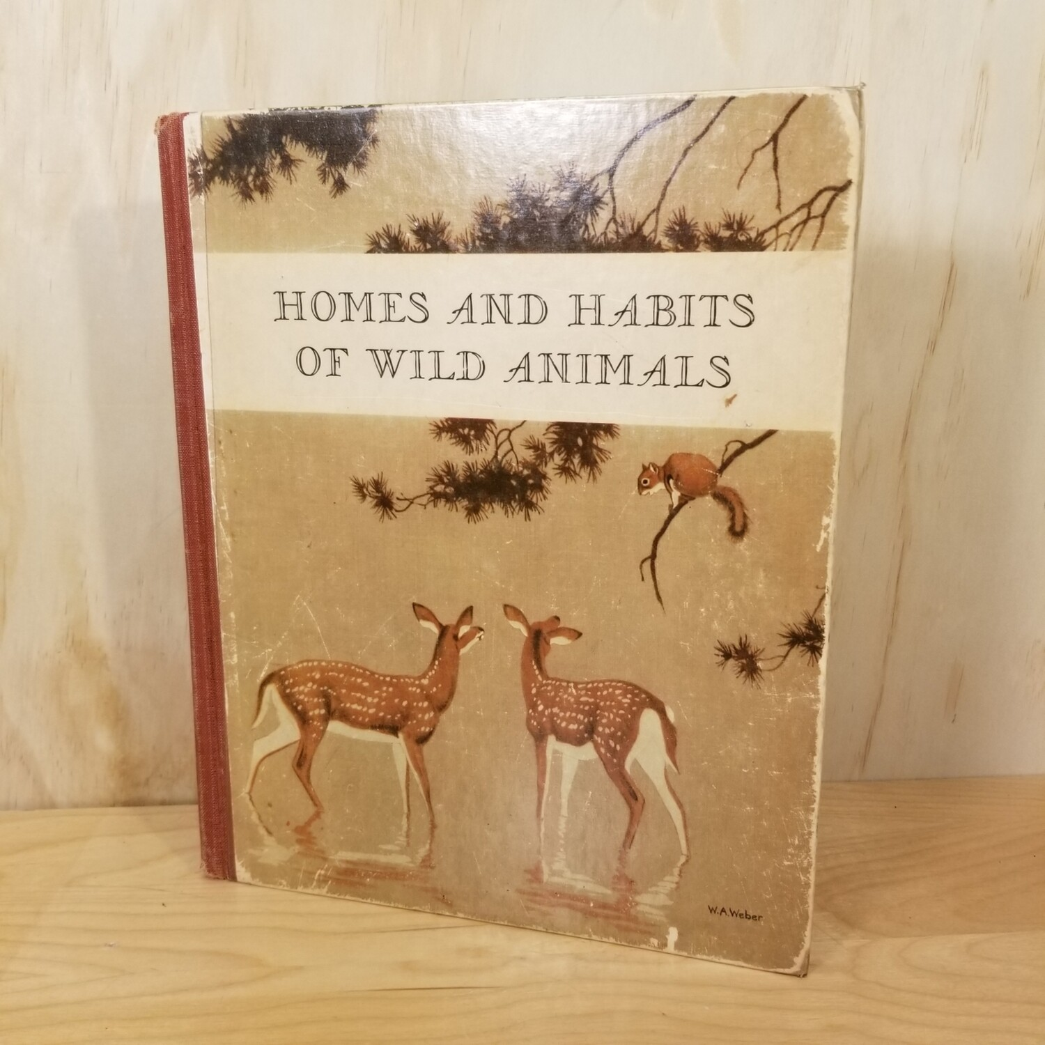 Homes and Habits of Wild Animals