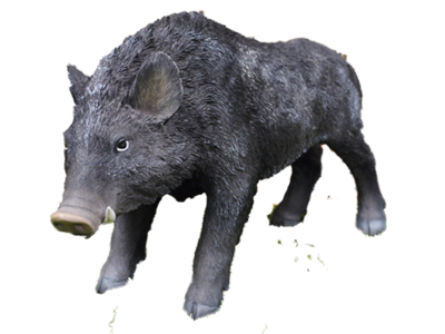 Billy the Boar
