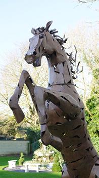 Finnegan the Rearing Horse