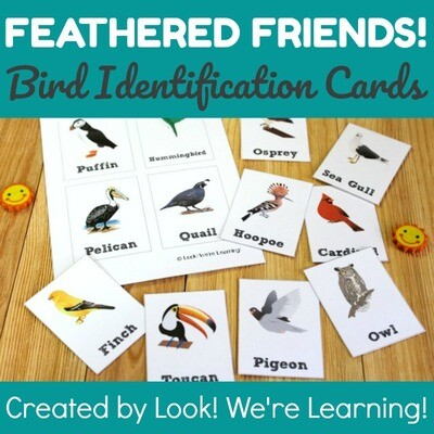 Printable Bird Identification Flashcards
