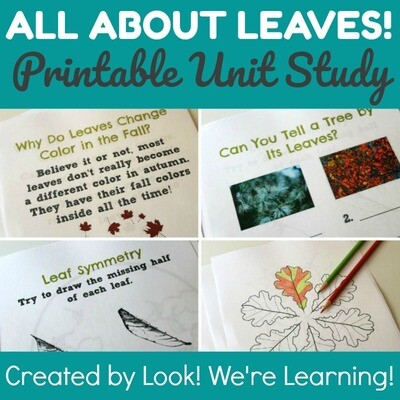 All About Leaves Unit Study