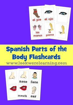 Spanish Parts of the Body Flashcards