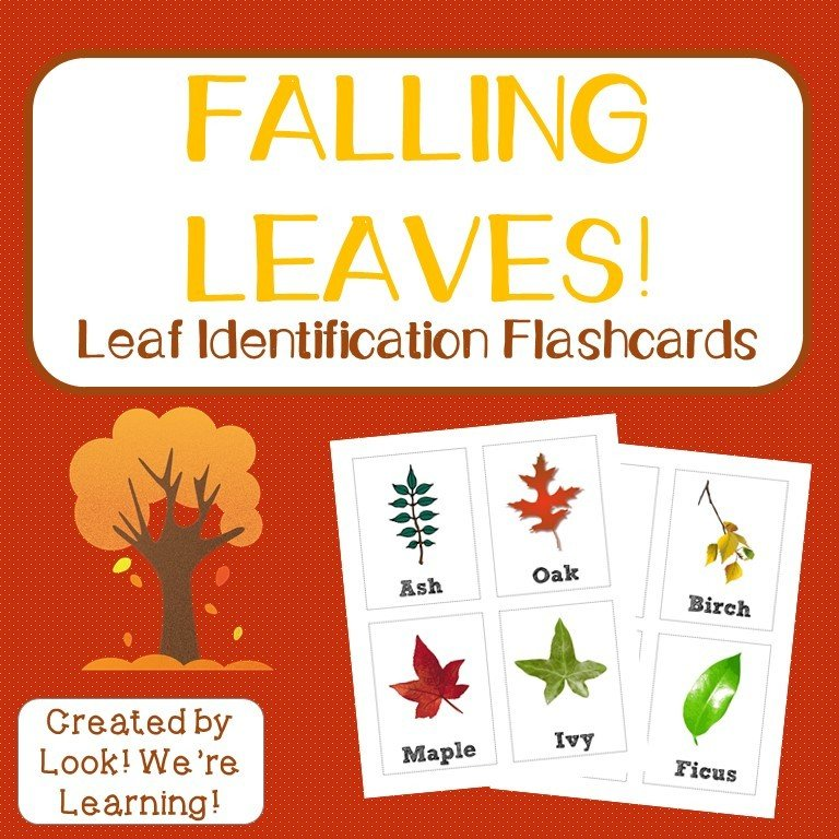 Leaf Identification Flashcards