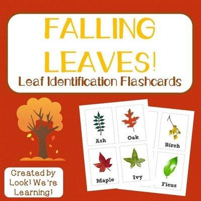 Leaf Identification Flashcards