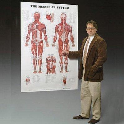 Jätteplansch Muskel eller Skelett 105x155cm