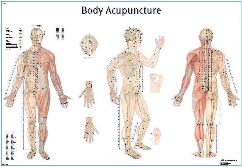 Akupunktur Plansch  98x68cm