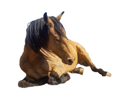 HorseSpeak Mug