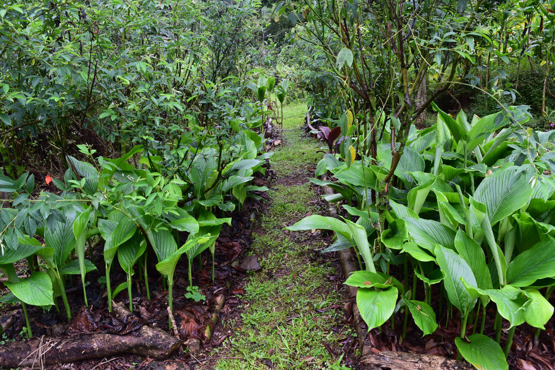 Gardened, not farmed
