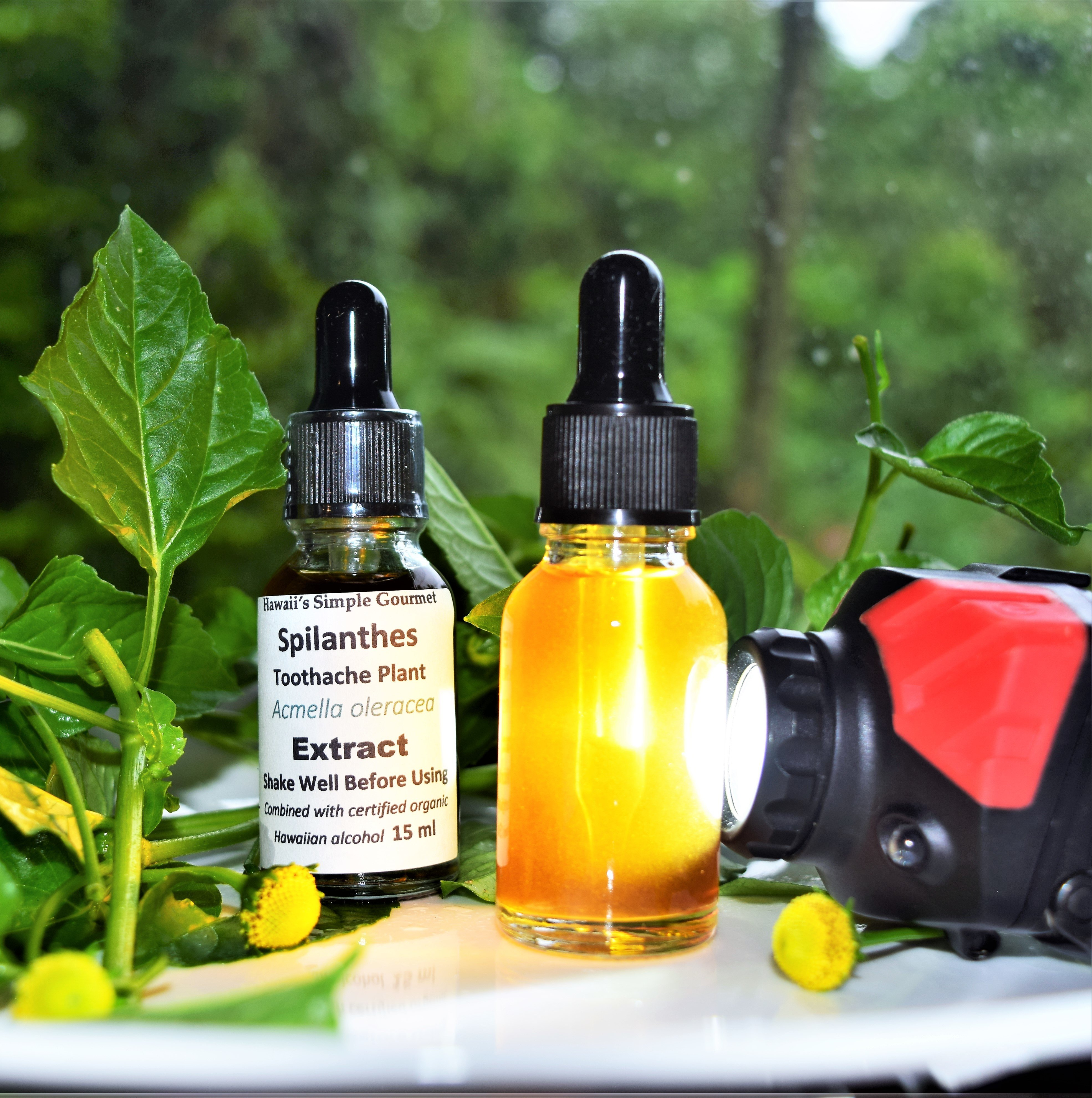 Toothache / Spilanthes Tincture 00001