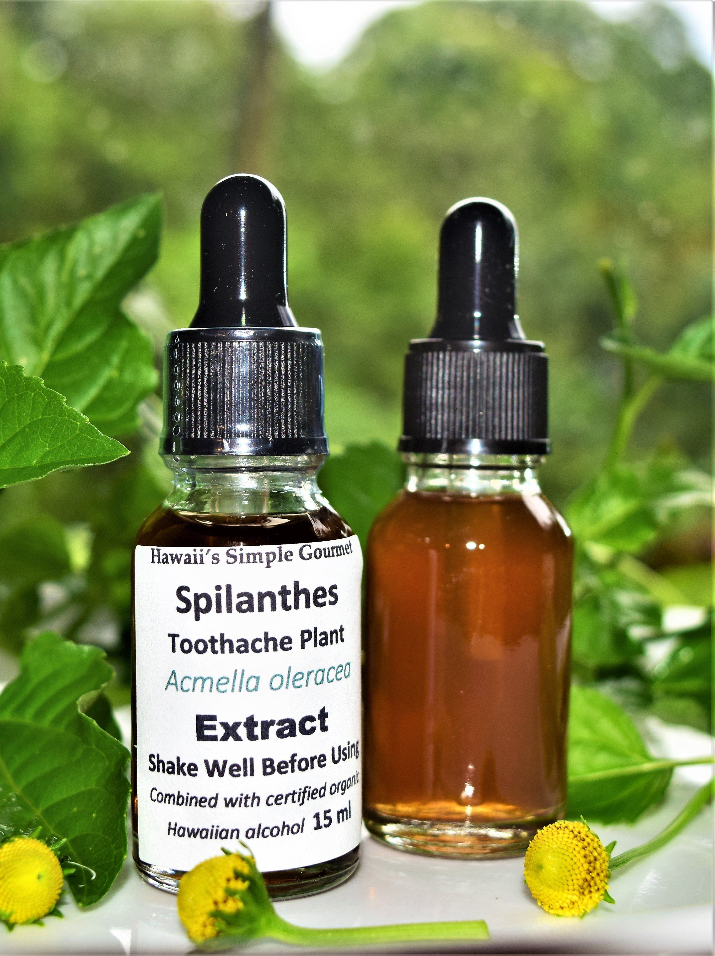 Toothache / Spilanthes Tincture