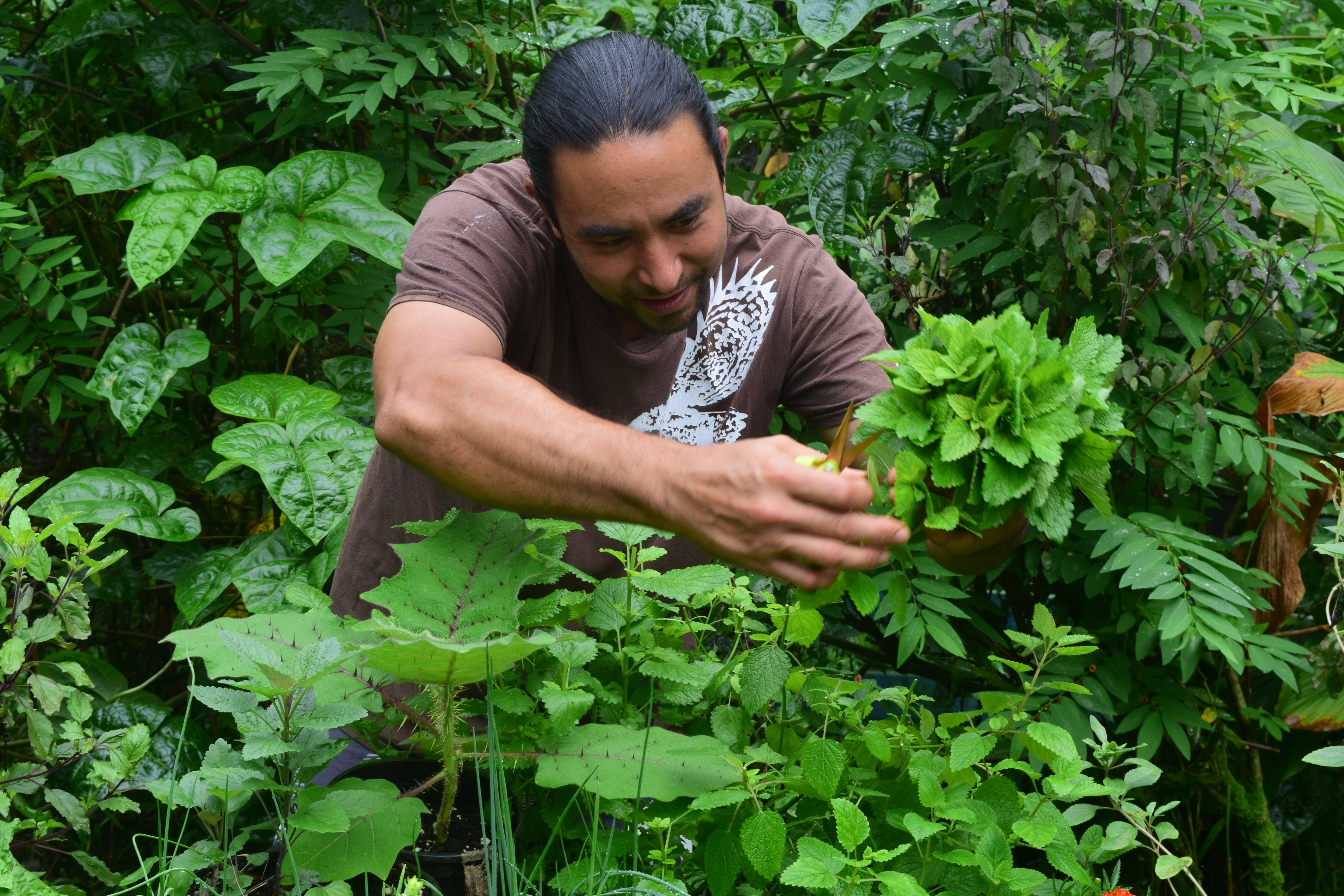 Harvesting from our permaculture garden.