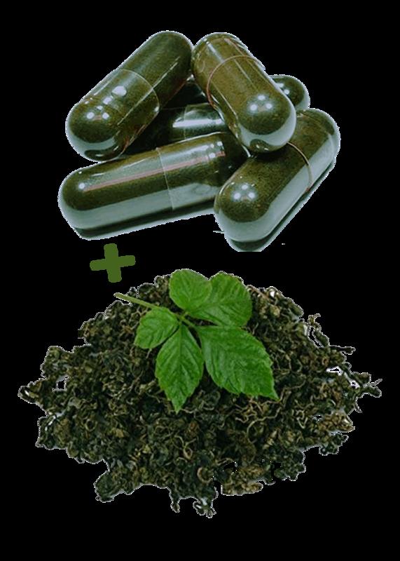 BIOHERBY® - Jiaogulan Tee + Extrakt Bio