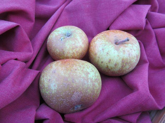 Canada Reinette Apple