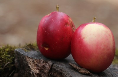 Early Sweet Tart Apple