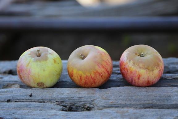 Wyken Pippin Apple