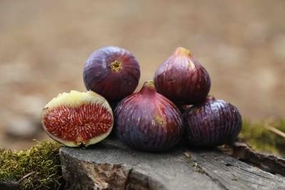 Fat Fig