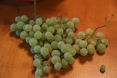 Italian Seedless Grape