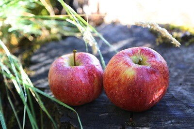 20 Oz. Pippin Apple