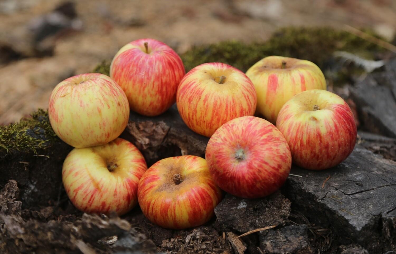 Mitchelson's Seedling Apple