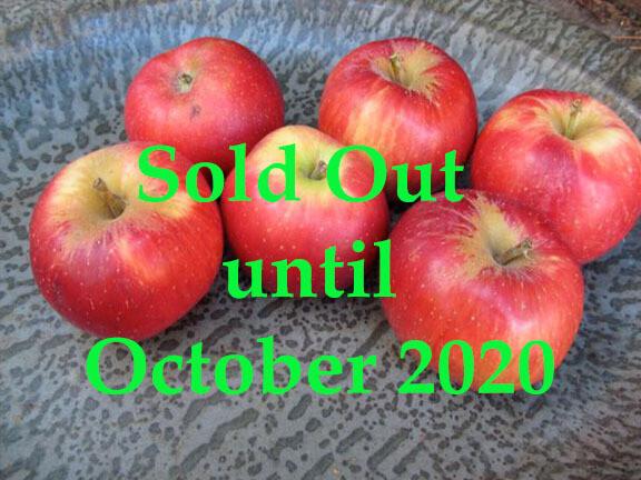 Esopus Spitzenburg Apple