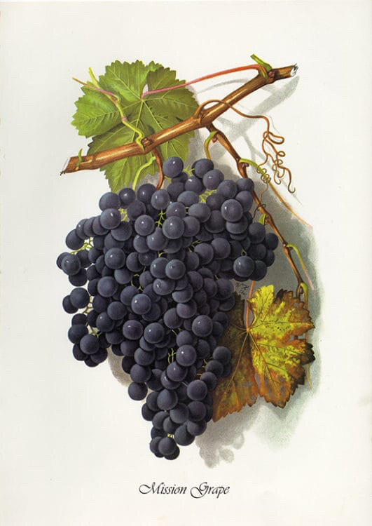 Mission Grape